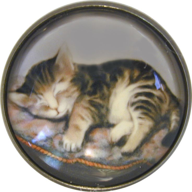 "1"" Crystal Low Dome Button of a Kitten on Fluffy Pillow $5.50"
