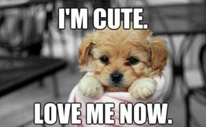 100 Funniest Love Memes Pictures To Express Your Love Puppy Dog Pictures Cute Cat Memes Cute Puppies