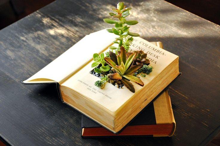 Aus altem Buch wird Blumentopf für Sukkulente