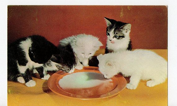 Vintage Kittens Drinking Milk Postcard Photograph Card Cats Cat Lady Kitten Felines Feline Art Pet Pets Paper Ephe Drink Milk Kittens Little Kittens