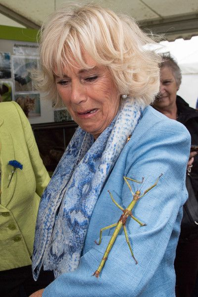 Camilla Parker Bowles Photos Photos - Camilla, Duchess of Cornwall meets a Giant Stick Insect during the 50th South of England Show at the South of England Showground on June 8, 2017 in Ardingly, United Kingdom. - The Duchess of Cornwall Attends the South of England Show