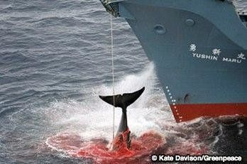 Petition · The UN: Eradicate whale hunting · Change.org We really need your support , please help. January 2017 #BanHunting #SaveTheWhales