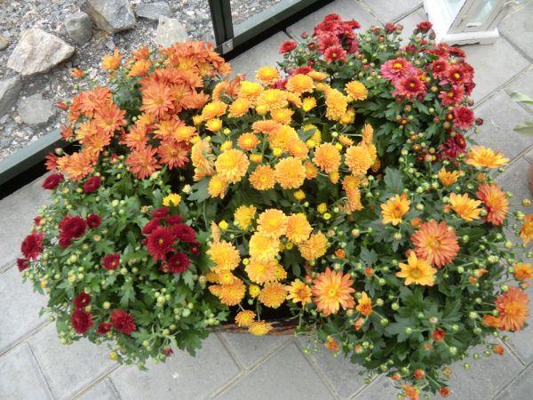 Nydelige høst blomster og tydelig høst farger
