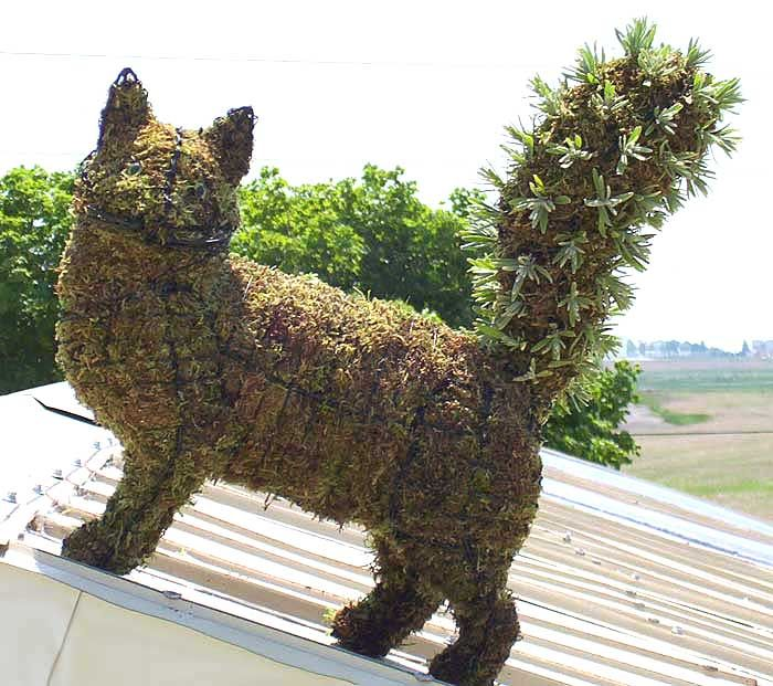 *Topiary cat: Google Image, Frames Topiaries, Topiaries Animal, Cat Topiaries, Topiaries Gardens, Gardens Art, Cat Wire, Wire Art, Cat Lady