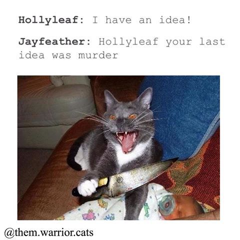Writing Prompts About Cats