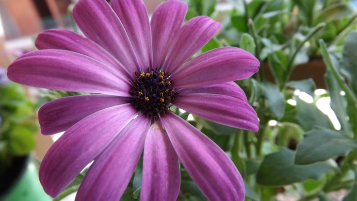 Από τα λουλούδια του μπαλκονιού!