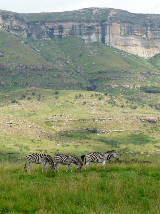 Zebra in the Golden Gate National Park, Drakensberg Mountains - BelAfrique your personal travel planner - www.BelAfrique.com