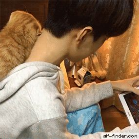 You read. I nap. Hahaha. I wish to have a kitty who's affectionate. Wouldn't that be wonderful? *sighs dreamily*