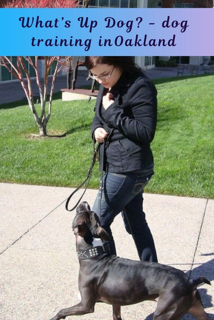 Dog Training Minneapolis Dog Training Oakland Dog Training
