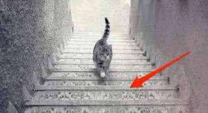Forget #TheDress (white and gold vs. black and blue): The #Internet can't decide if this cat is going up or down stairs. Dbl-click pic for article. #Interesting