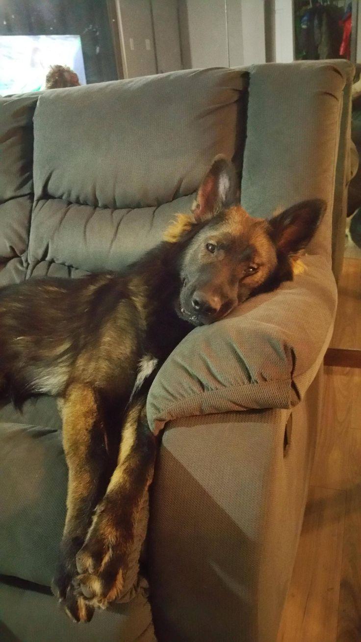 My Sleepy wolf