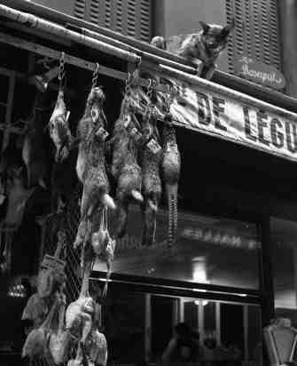 Chien de garde et gibier,Paris  Décembre 1954 |¤ Robeert Doisneau | 26 novembre 2015 |  Atelier Robert Doisneau | Site officiel