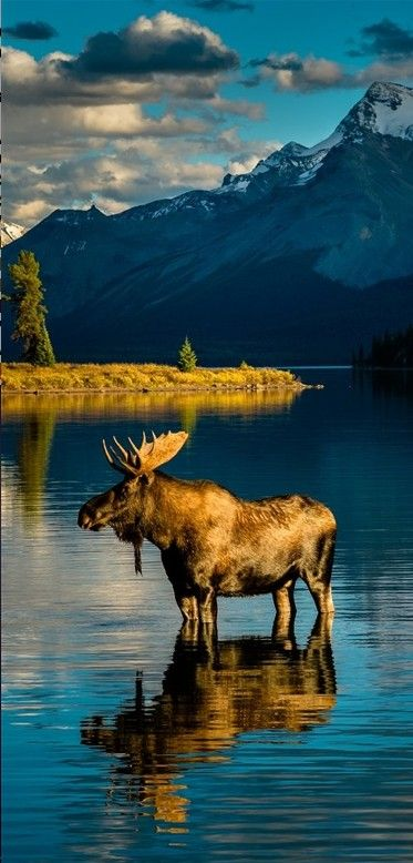 Warming after bath at Moraine Lake in Banff National Park ~ Alberta, Canada • photo: Edward Marcinek on 500px