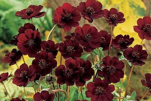 Continuiamo la nostra interessante classifica dei fiori più rari del mondo, affrontando oggi le prime 5 posizioni. Anche in questo caso parliamo di fiori di inestimabile bellezza e di incomparabile…
