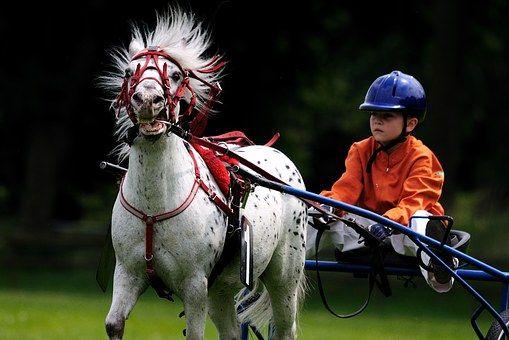 Лошадь, Лошадиные Скачки, Райтер