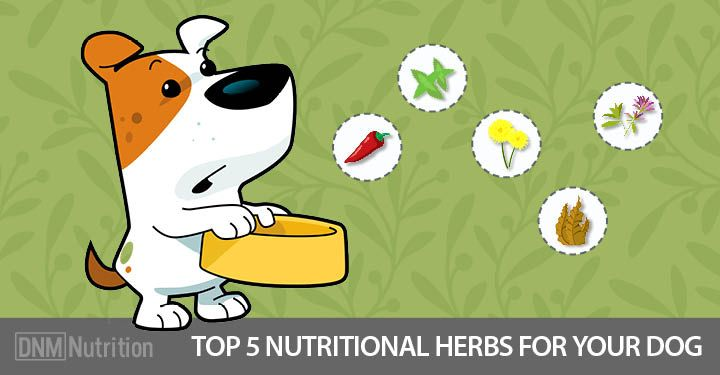 Nutritional Herbs Your Dog Shouldn't Be Without