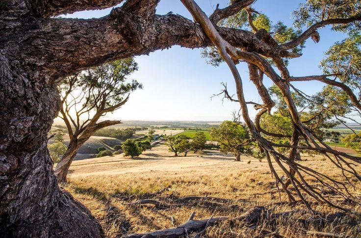 Barossa Valley wine region, South Australia.