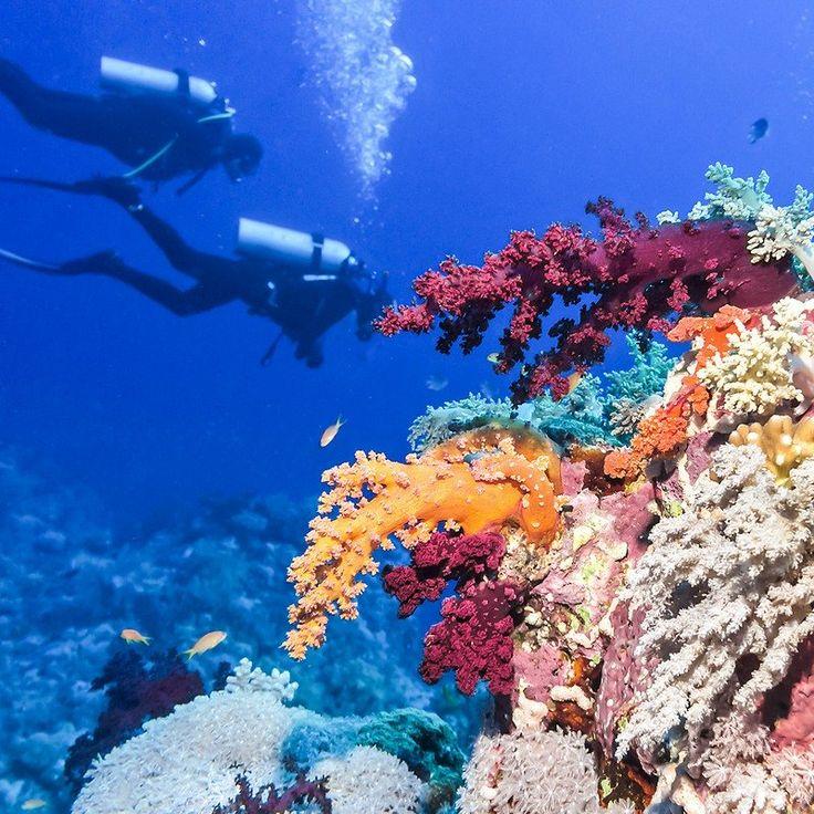Great Barrier Reef Vs. Belize Barrier Reef: 6 Key ...