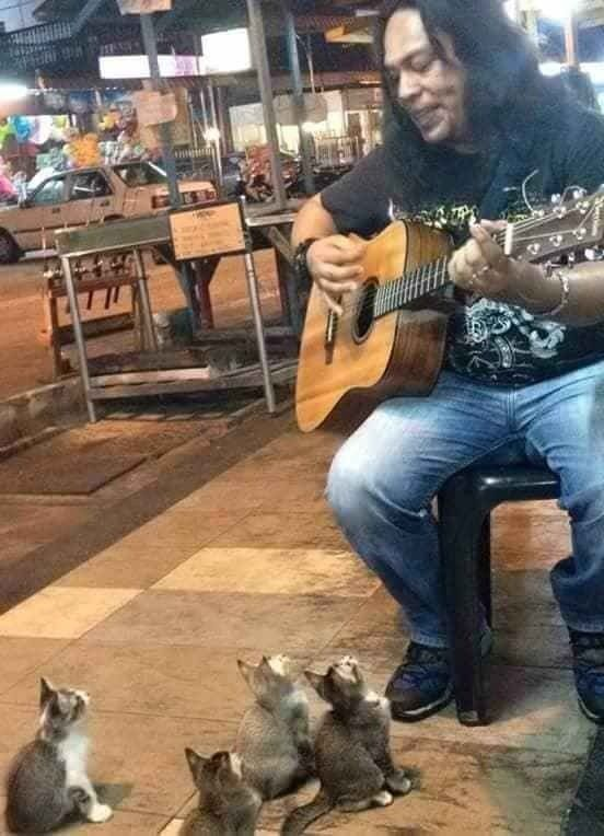 This man serenades to a small group of music loving kittens. Four kitties come gather around in front of a musician when he plays the guitar and sings on the streets of Pangkor, Malaysia. Photo: Dunia KucingThe owner of the video wrote online: 'My friend just finished his buskin...