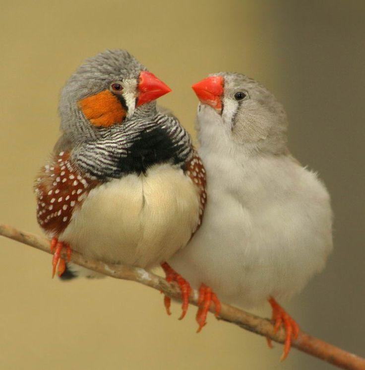 Mom loved birds.  We had finches before we had parakeets.
