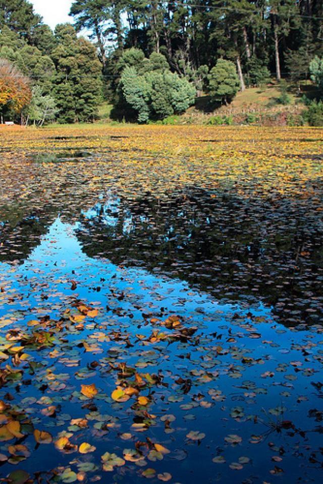 Parque Saval Valdivia de mi Chile hermoso...