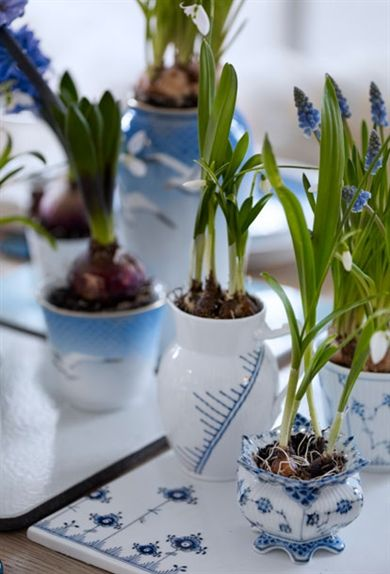 Mix of Royal Copenhagen for bulb forcing, love it, add a little Spring to your life!