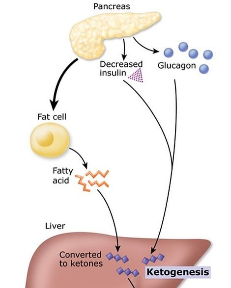 7 best Biochemistry Notes images on Pinterest ...