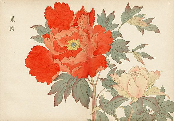 Original Tanigami Konan Japanese Woodblock Peony Series from the Teiten (Imperial Exhibition) Rare, first edition, circa 1917