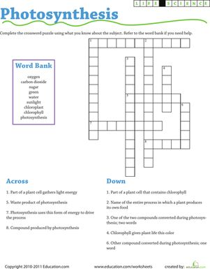Third Grade Life Science Puzzles & Sudoku Worksheets: Life Science Crossword: Photosynthesis