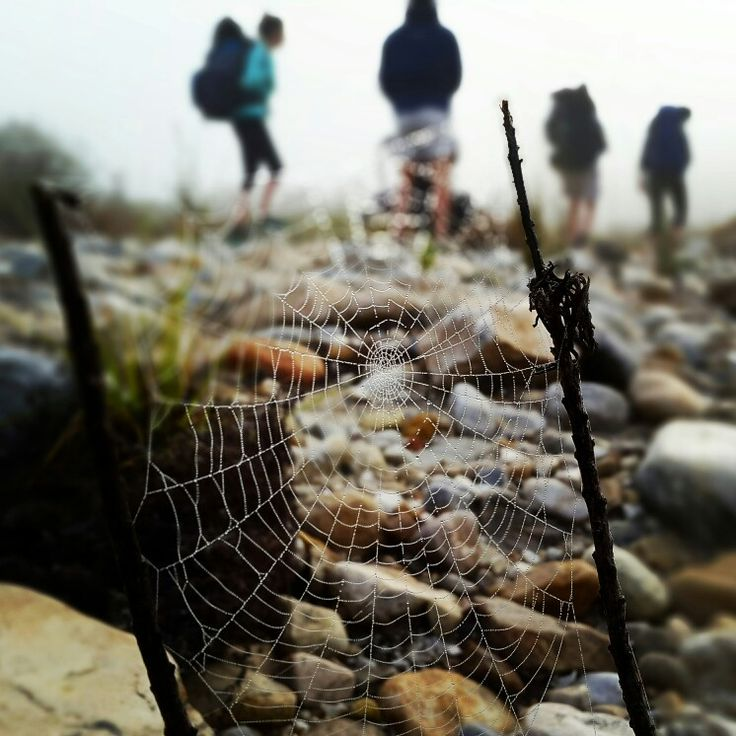 Greyton to McGregor hike. South Africa. #westerncape #southafrica #hike #nature #spiderweb #photography