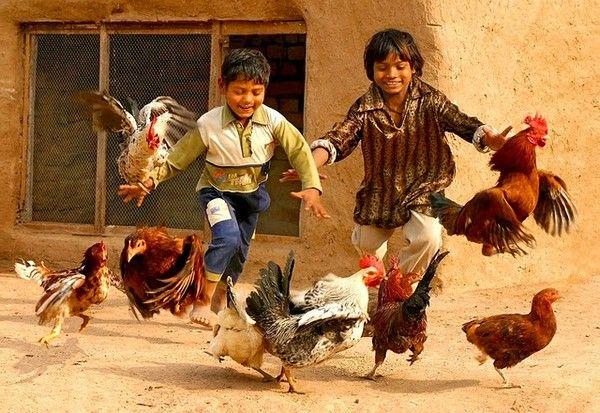 Enfants du monde, apanhar galinhas - a coisa mais divertida