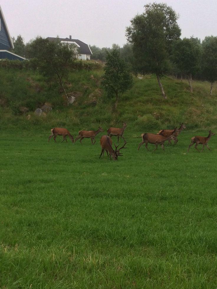 Melandsjø, Hitra 10 juli kl.21.45 2014