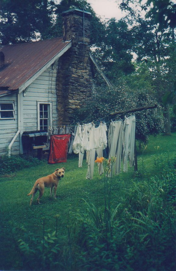Dog, clothesline and farmhouse
