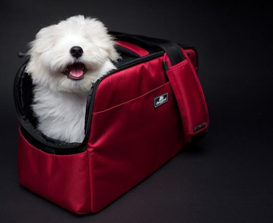Check Out Pet Friendly Check-Ins ... #pets #animals #travel #hotels .. PetsLady.com  @roncallari