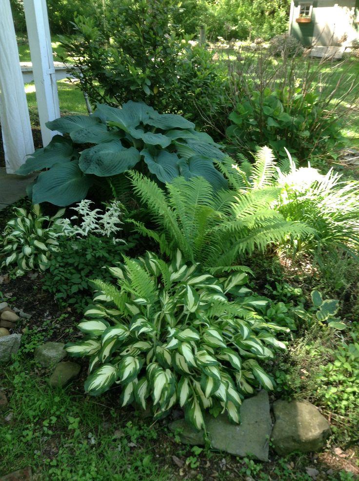 Elephant Ear Hosta And Ostrich Ferns Shade Garden