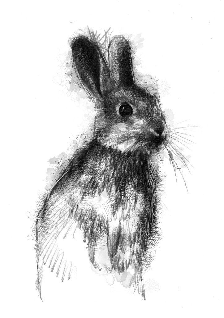 Little bun, Artist Sean Briggs producing a sketch a day, prints available at https://www.etsy.com/uk/shop/SketchyLife  #art #drawing #http://etsy.me/1rARc0J #rabbit
