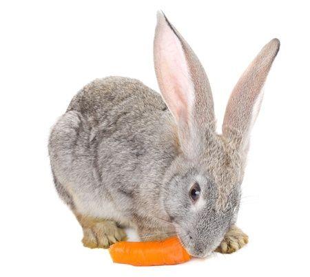 Slanke mensen eten ook niet de hele dag worteltjes