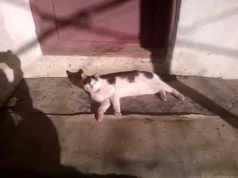 Pisica si cainele....!!!