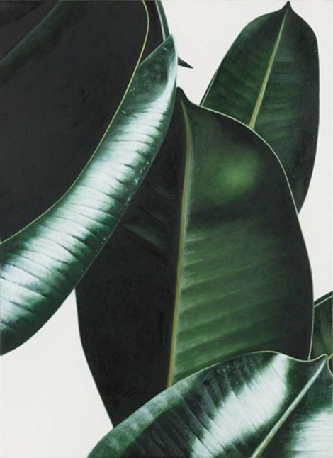 RUBBER PLANT, OIL ON LINEN, OLIVER OSBORNE 2012