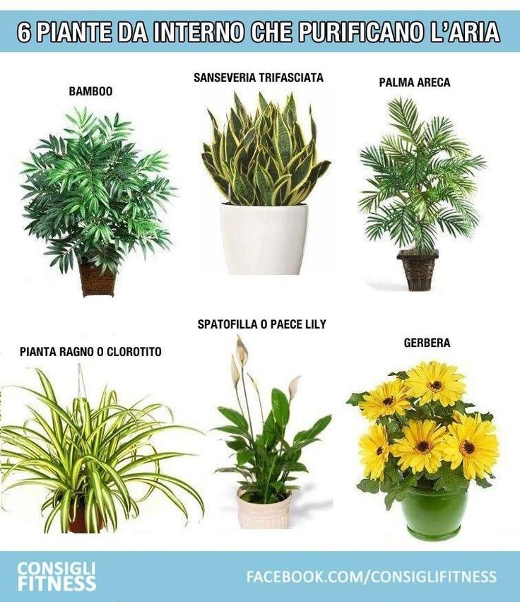 Le 25 migliori idee su piante da appartamento su pinterest - Piante da interno resistenti ...