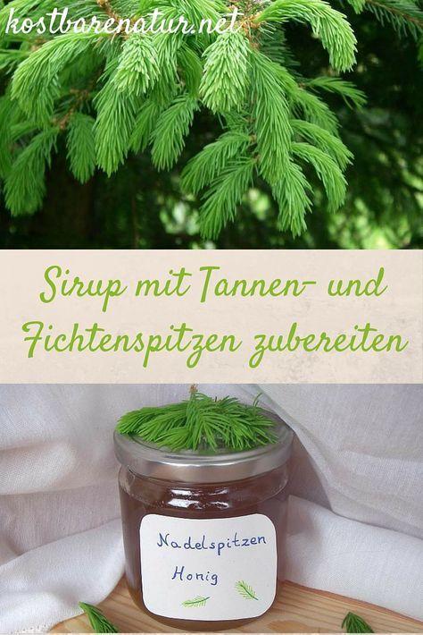 Im Mai kannst du die hellgrünen und sehr gesunden Spitzen von Tannen und Fichten sammeln und zu köstlichen Speisen verarbeiten, zum Beispiel diesem Sirup!
