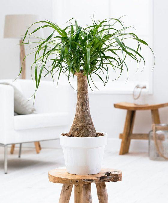 Die Besten 25+ Zimmerpflanze Palme Ideen Auf Pinterest | House Of