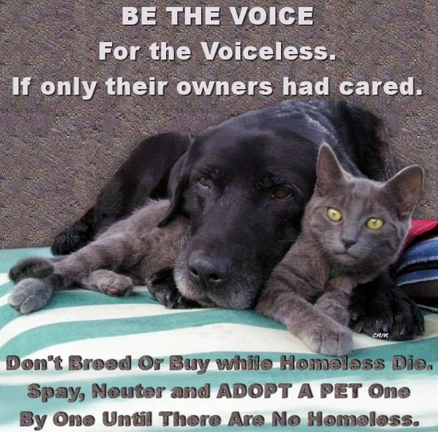 BE THE VOICE For the Voiceless. If only their owners had cared. Don't Breed Or Buy while Homeless Die. Spay, Neuter and ADOPT A PET One By One Until There Are No Homeless.: