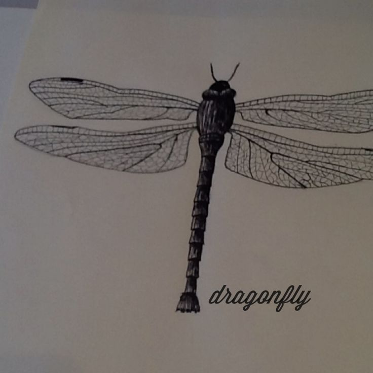 Drawing of a drafonfly, using calligraphy pen