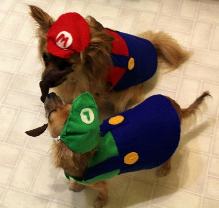 Mario and Luigi. Costumes by Regina E Fox modeled by Winston u0026 Peyton Long Coat Deer Head Chihuahuas. & 20 best Mario e Luigi images on Pinterest | Super mario bros Luigi ...