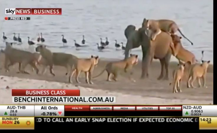 Nina Karnikowski talks to Sky News about her recent trip to Zambia with Bench International. She speaks about the beauty of the country, the safari camps she stayed at and about watching the little baby elephant fight off 14 lions!    Book this SPECIAL OFFER luxury safari with Bench International: http://www.benchinternational.com.au/experiences/the-secret-wonders-of-zambia/
