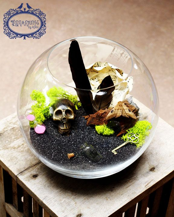 Best Terrariums Images On Pinterest Adele Terrariums And Ferns - Amazing diy non living terrarium