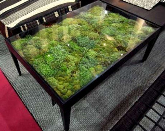 Now THIS is a coffee table! Buy a plain coffee table with a clear glass top or build your own. Inside place different types of live moss and spray water once a week for maintenance. Use fake moss if you don't have a green thumb lol #nature decor
