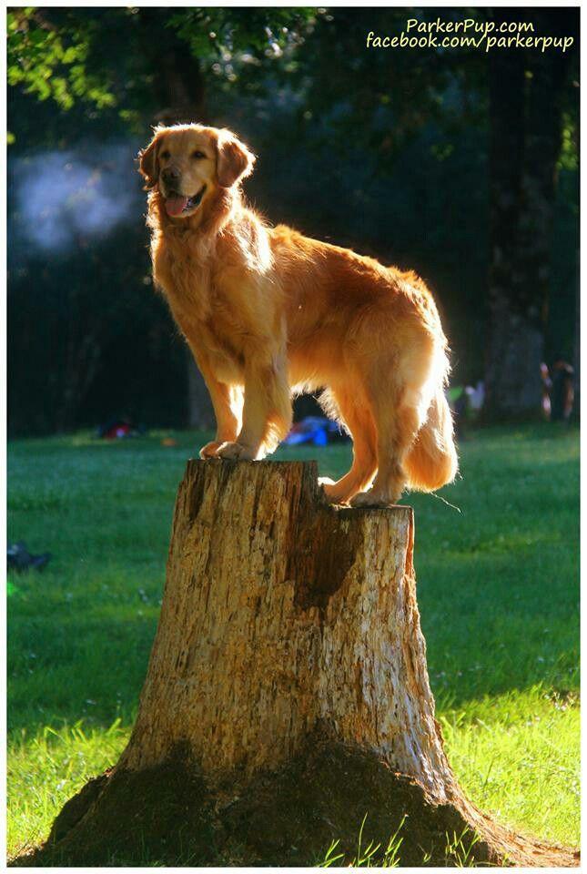 :) On a pedestal