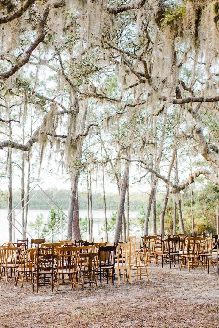 Dreamy Winter Wedding Among The Florida Willow Trees Among Dreamy Florida Trees We Willow Tree Wedding Forest Wedding Venue Florida Wedding Venues